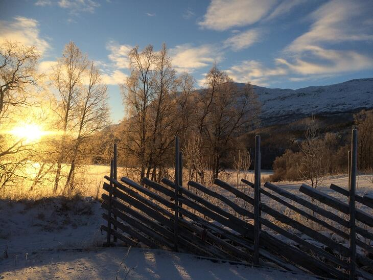 Skigard i vinterlys